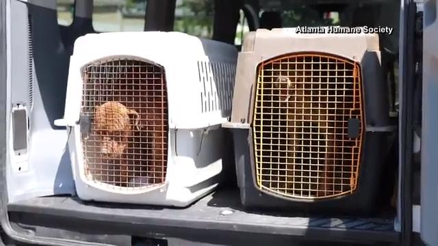Florida Human Society evacuates rescue dogs to Atlanta