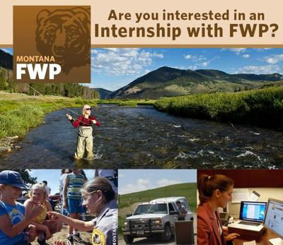 Fish Wildlife and Parks internship