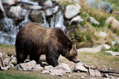 Teen survives bear attack with the help of common camping device