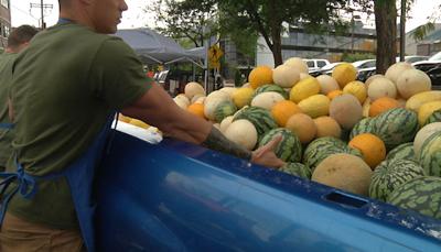 Montana Treasure: Dixon Melons