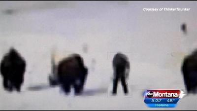 Yellowstone Bigfoot Video Goes Viral