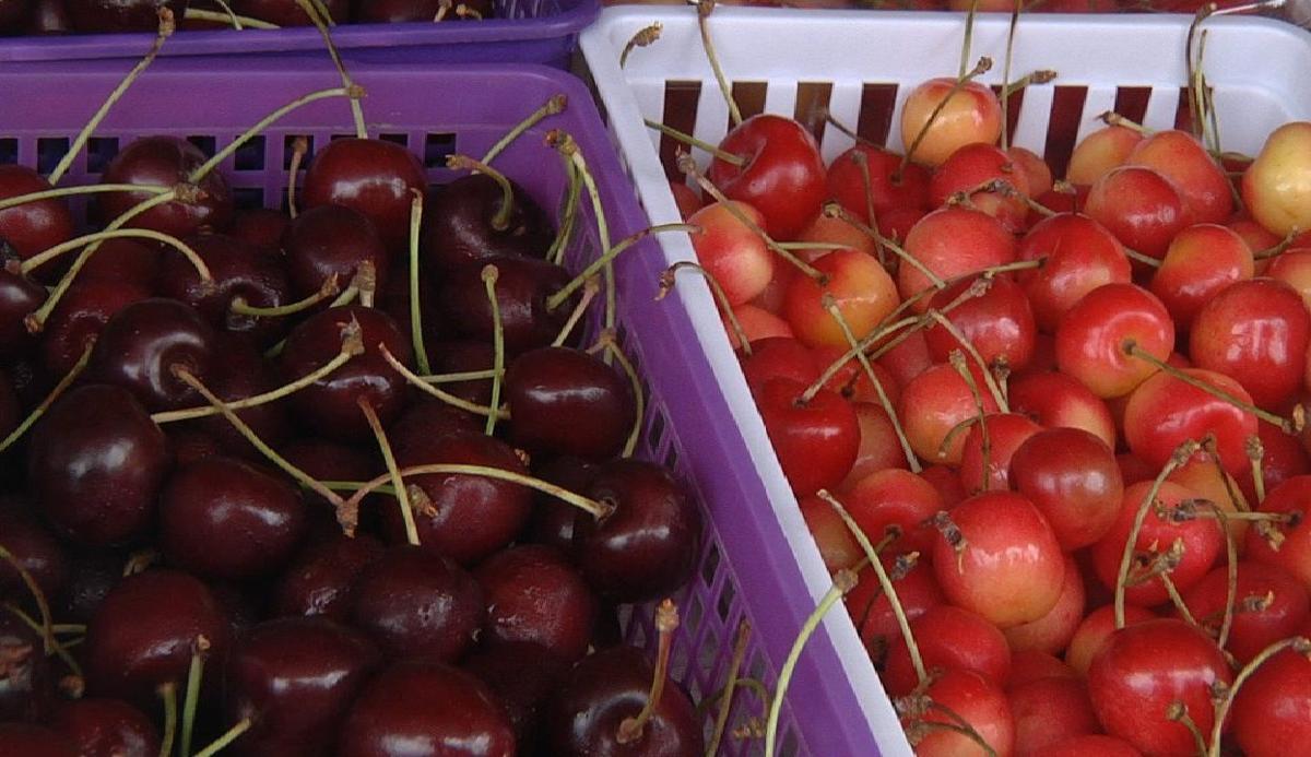 Flathead cherries coming soon!