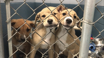 Missoula Animal Control Shelter Puppies