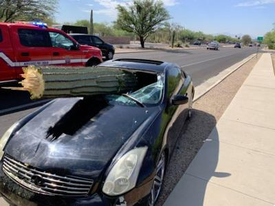 Arizona driver escapes injury when saguaro cactus pierces windshield