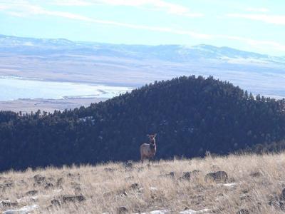 Images: Elk on the horizon