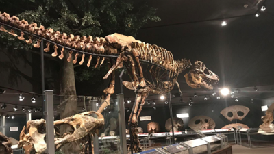 Museum of the Rockies has record-breaking summer