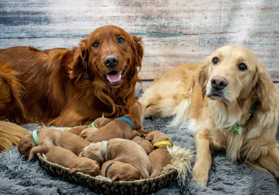 Butte Dog And Her Puppies Go Viral On Social Media Abc Fox