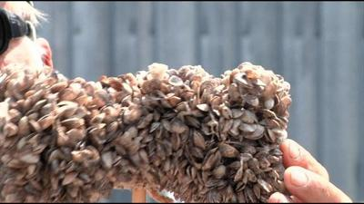 2 mussel-encrusted boats stopped at Montana inspection sites