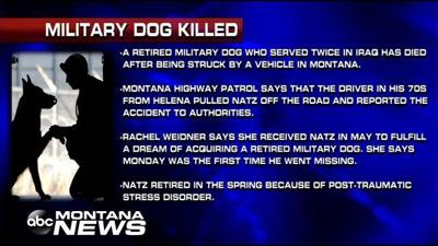 Retired Military Dog Killed | Student of the Week