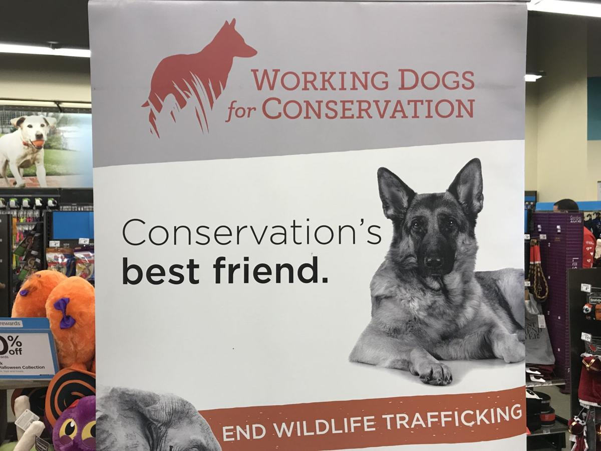 Missoula non-profit, Working Dogs for Conservation awarded $250,000 grant