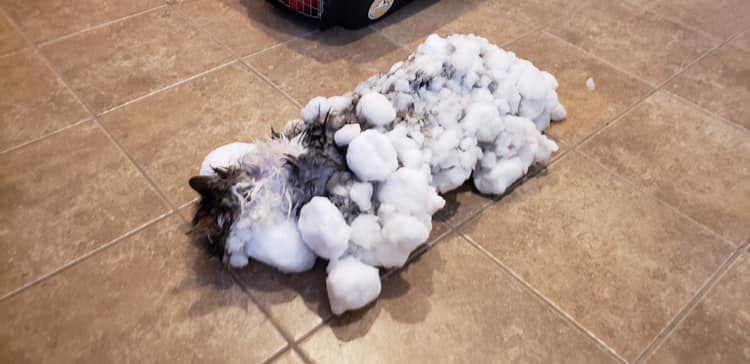 Frozen Cat