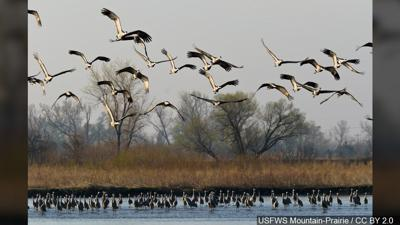 Bird migration is causing a headache for many in Great Falls