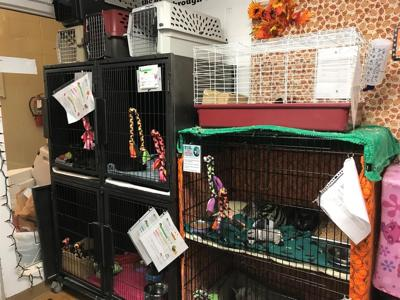 Animal shelters across the state need your help
