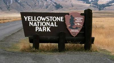 Alternatives For Yellowstone Bison Management Offered