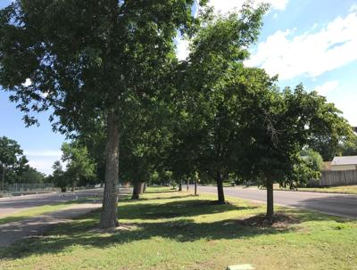 Tree Funding