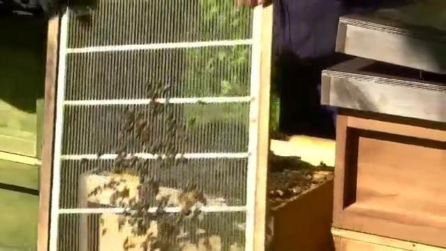 Learning Behind Bars >> Bees Behind Bars How Inmates Are Learning About Beekeeping