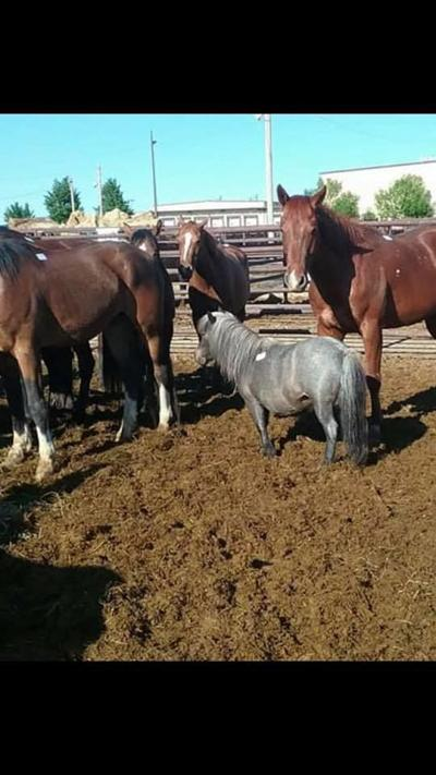 Suspected horse abuse at auction site has rescue groups up in arms