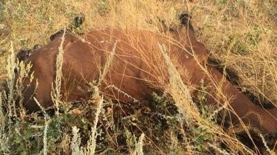 Several dead horses found in Roosevelt County