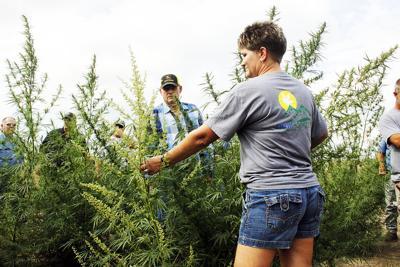 Industrialized hemp, new crop in county