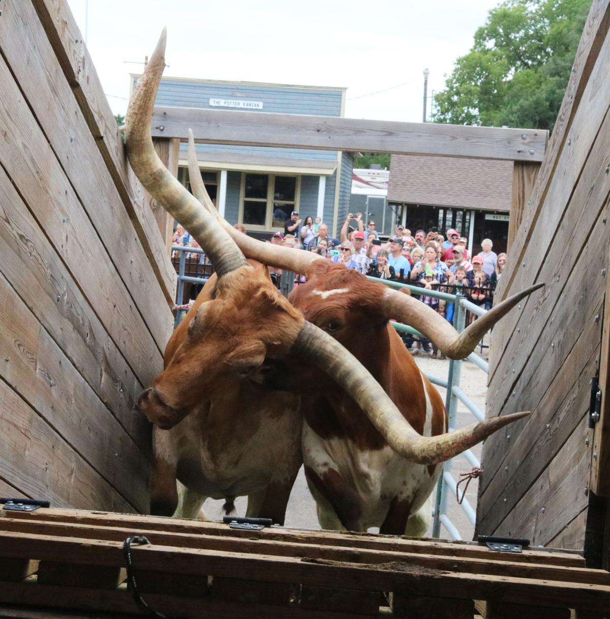 Longhorns on rails