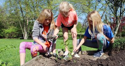 Madison County wants people to go wild and plant for pollinators