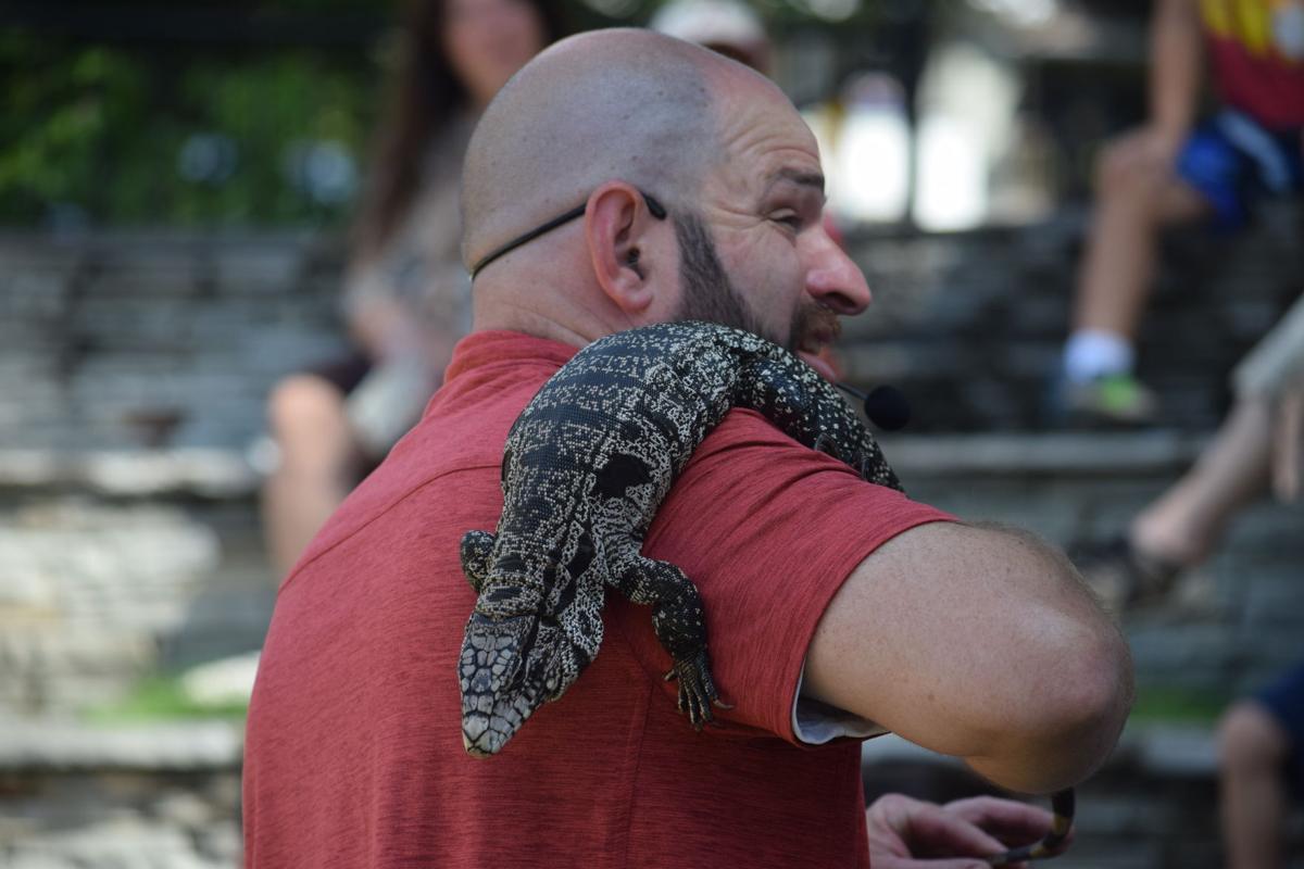Tegu Lizard