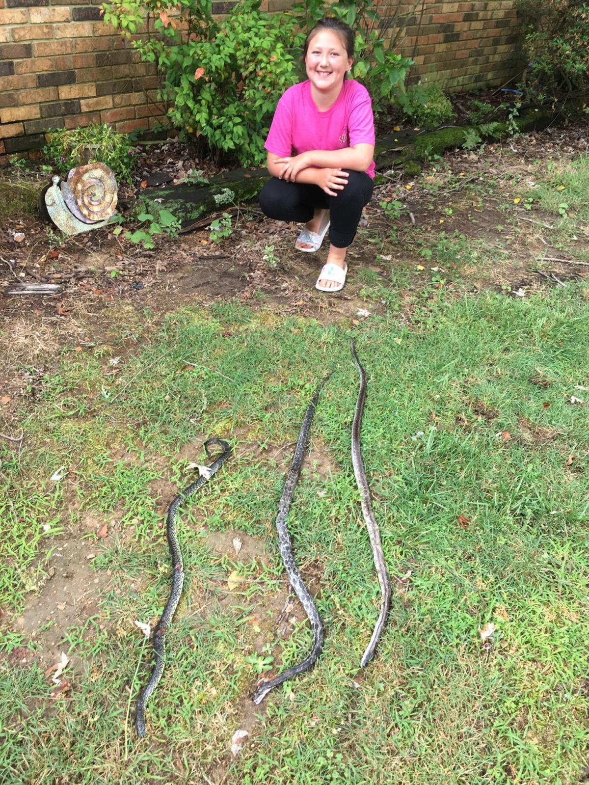 Tinsli and Snakes