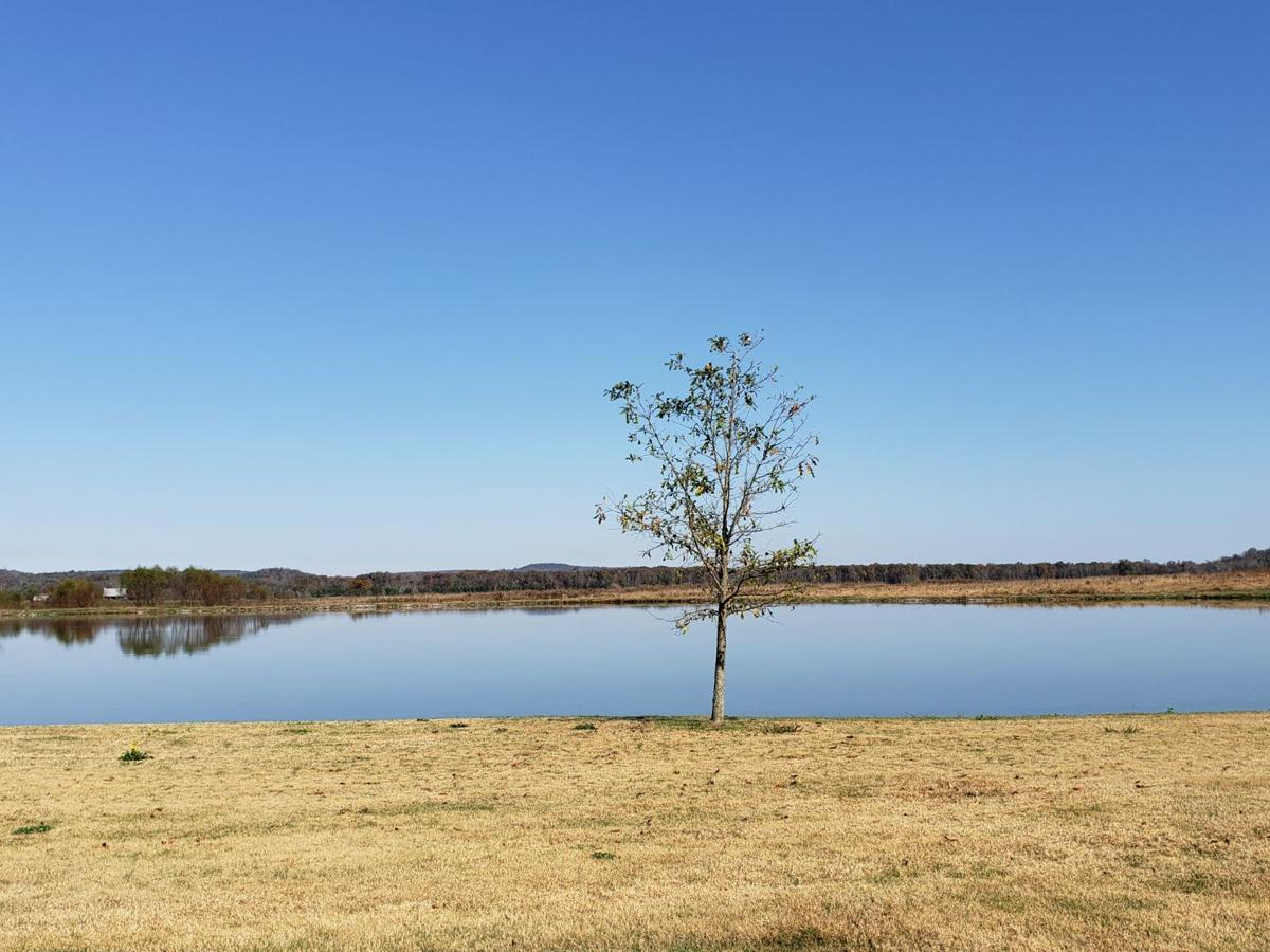 Dream Ranch Pond