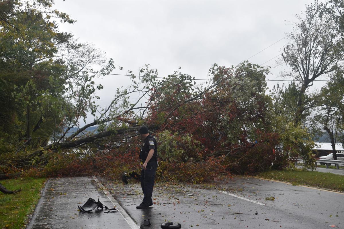 Tree Fell on Hwy 69