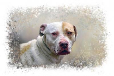Pritchett, Dog of the Week