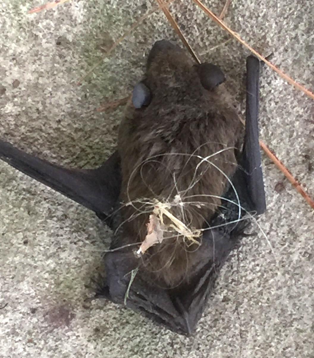 Bat in Shoe