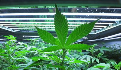 Cannabis Industry Update