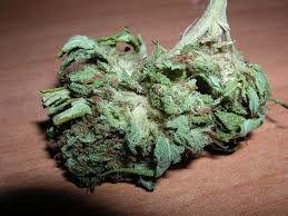 Matanuska marijuana