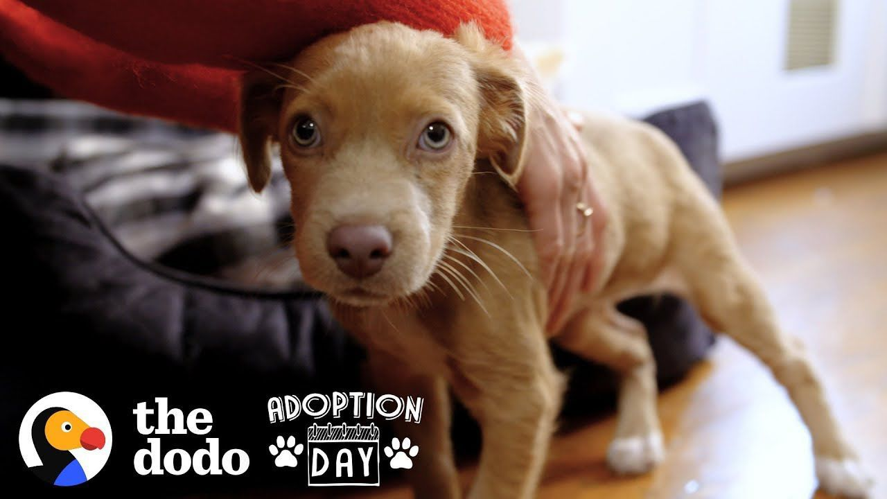 Adorable Puppy Sisters Gets Adopted by Woman And Her Best Friend | The Dodo Adoption Day