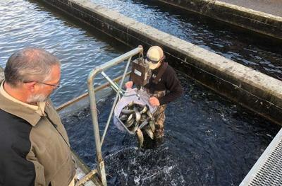 DNR has begun annual trout stocking | Features | albanyherald com