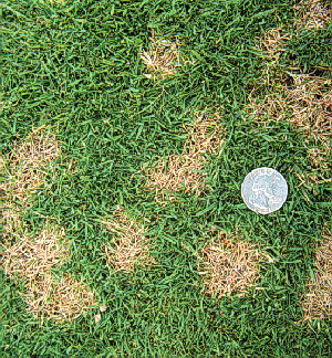 turfgrass.png