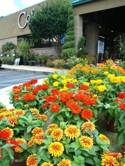 15 flowers you need to grow in Georgia