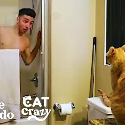 Every Cat Parent… | The Dodo Cat Crazy
