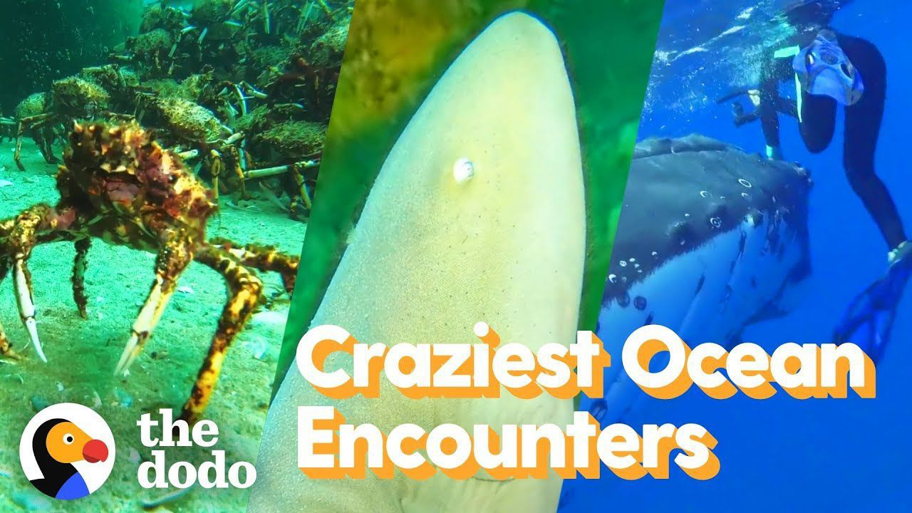 Top 5 Craziest Ocean Encounters | The Dodo