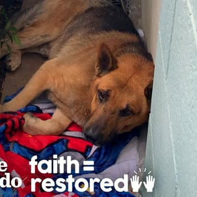 Stray Dog Living on Side of a Building and too Scared to Move | The Dodo Faith = Restored