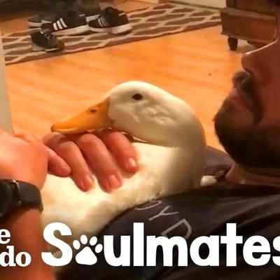 Ben Afquack The Duck Follows His Dad Everywhere | The Dodo Soulmates