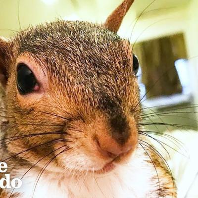 This Rescued Squirrel Is The Ultimate Diva | The Dodo
