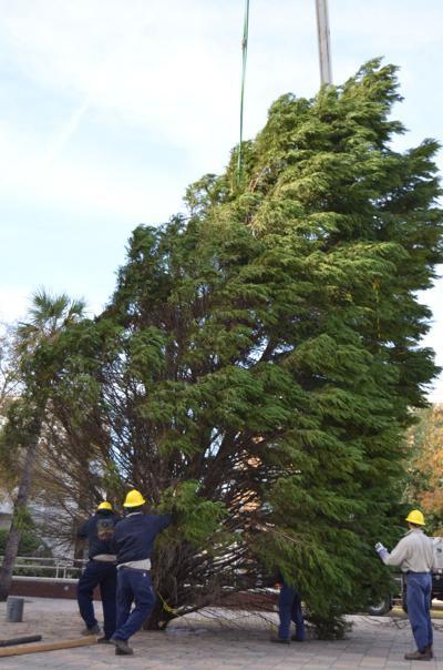 christmas tree2.jpg