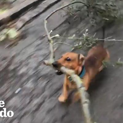 Dog Is Very Good At Big Sticks | The Dodo
