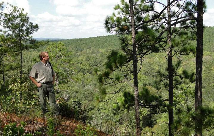 Biologist works to save longleaf habitat