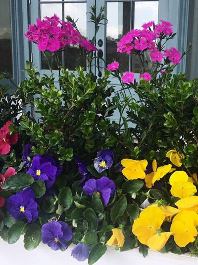 Bouquet Dianthus Reigns Supreme For Cold Hardy Cut Flowers
