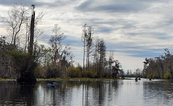 600x370 Great Blue Heron flying, Suwannee River, Okefenokee Swamp, 2019-12-07, Pictures, in Help Georgia stop titanium mine threatening Okefenokee Swamp --Dirty Dozen 2020, Georgia Water Coalition, by John S. Quarterman, for WWALS.net, 17 November 2020