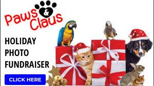 Share you favorite photo in the Paws & Claus photo contest