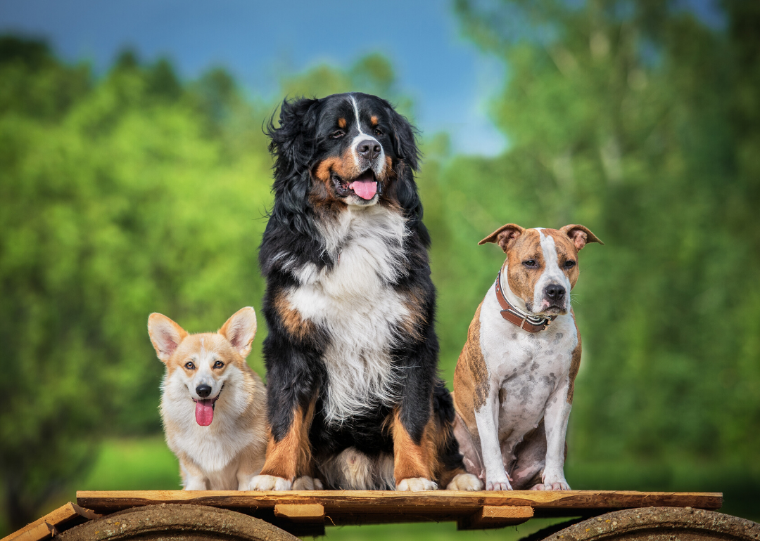 50 fascinating facts about dogs