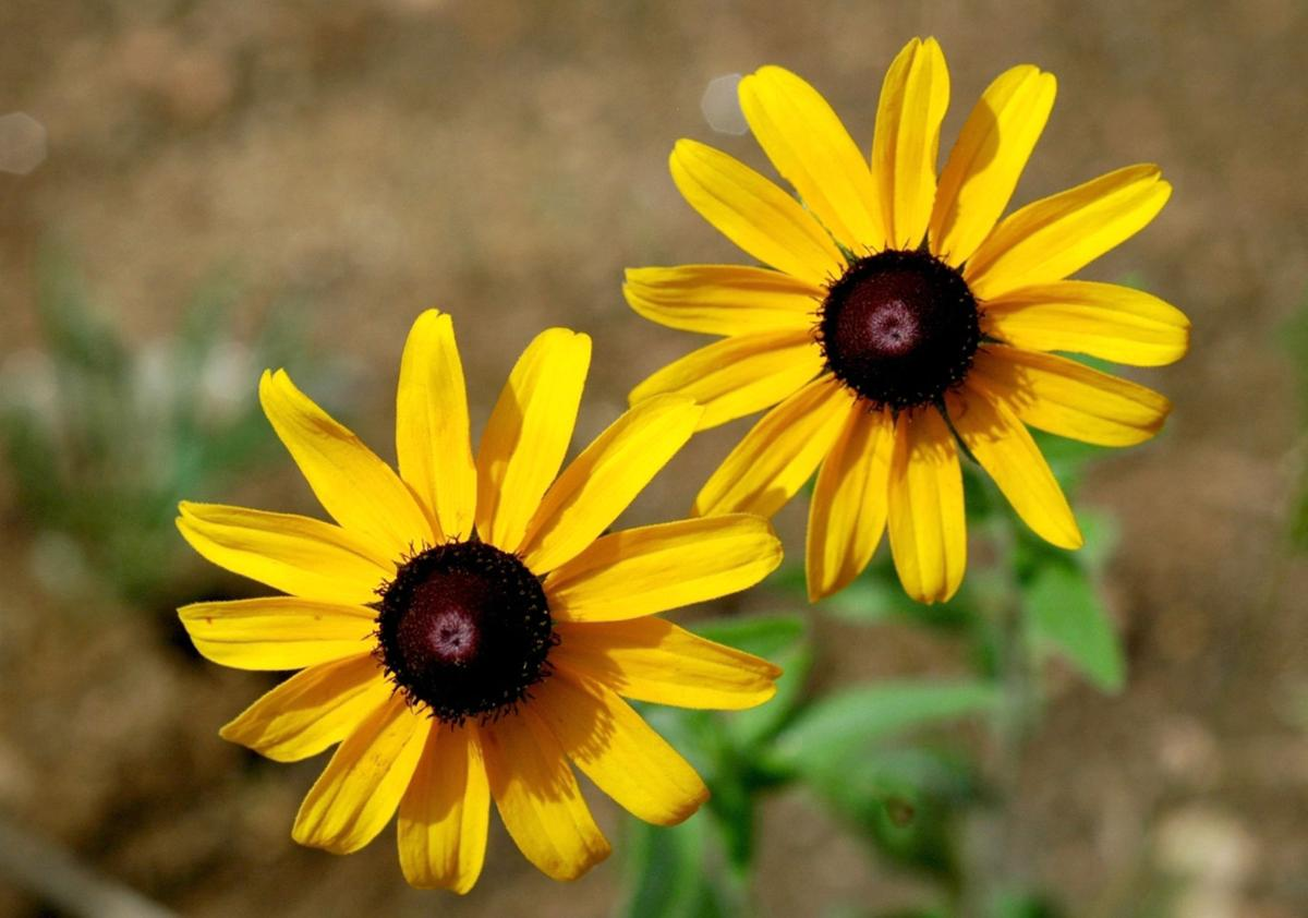 15 Flowers You Need To Grow In Georgia Features Albanyherald